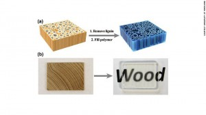 clear_wood_legno_trasparente_architettura_2