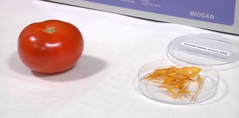 plastico cascara tomate
